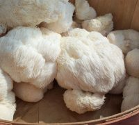 Lion's Mane Mushroom Benefits (PLUS how to cook)