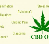 How To Use CBD Oil for Pain Relief